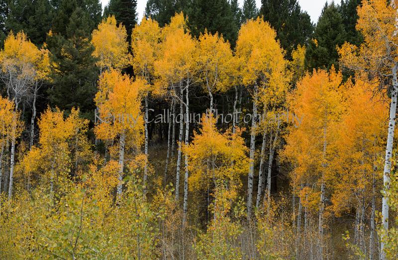 Antelope Flats Fall color-1502