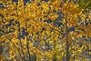 Neighborhood Fall color-1873