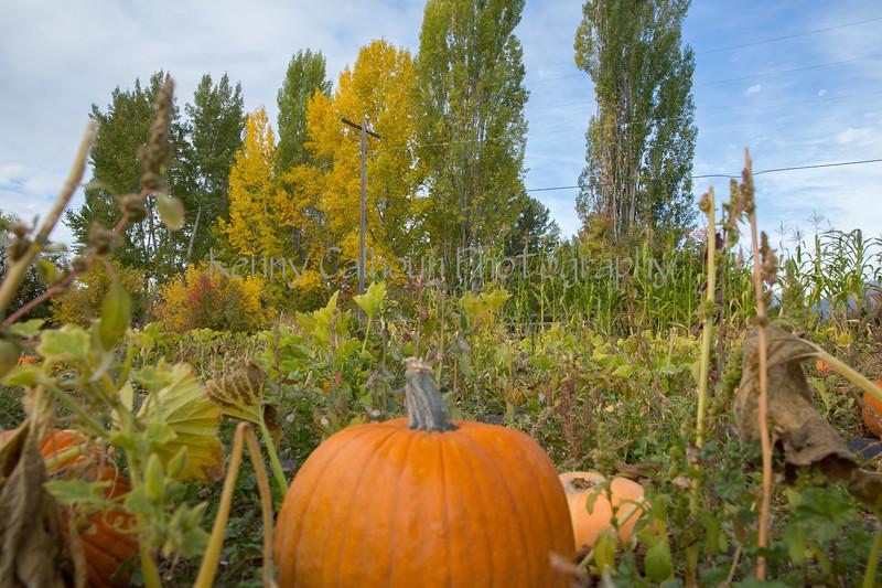 Meadowlark Pumpkin Farm-2255