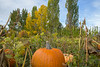 Meadowlark Pumpkin Farm-2255