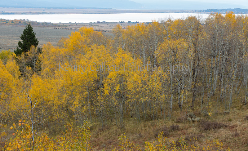Antelope Flats Fall color-1497
