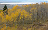 Antelope Flats Fall color-1497