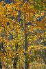 Neighborhood Fall color-1865
