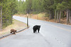 Teton Lake Bears-4063