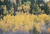 Teton Valley Color-4389