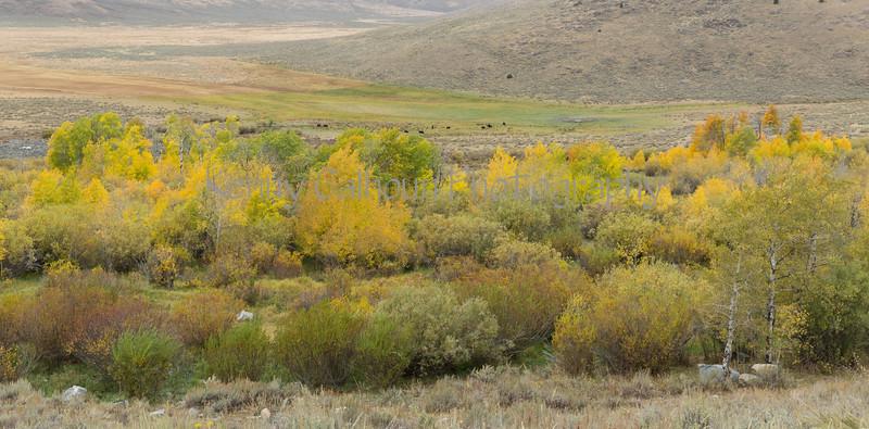 Antelope Flats Fall color-1582