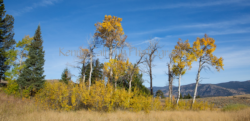 Blacktail Rd Fall Color-2075