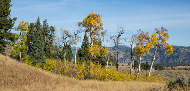 Blacktail Rd Fall Color-2059