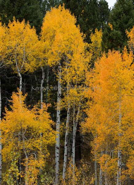 Antelope Flats Fall color-1504