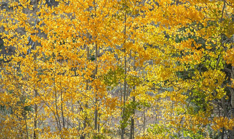 Neighborhood Fall color-1800