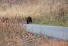 Wilson Rd Bears-3852