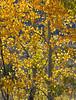 Neighborhood Fall color-1860