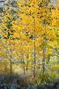 Neighborhood Fall color-1793