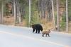 Teton Lake Bears-4083