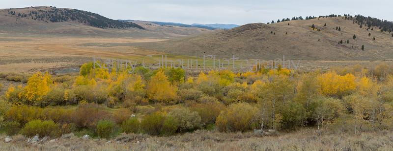 Antelope Flats Fall color-1592
