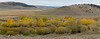 Antelope Flats Fall color-1592