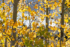 Neighborhood Fall color-1831