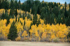 Teton Valley Color-4393