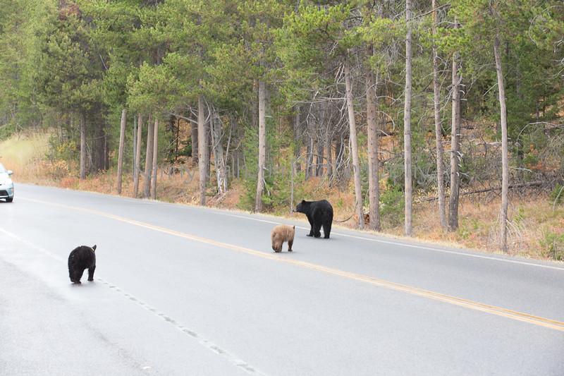 Teton Lake Bears-4079