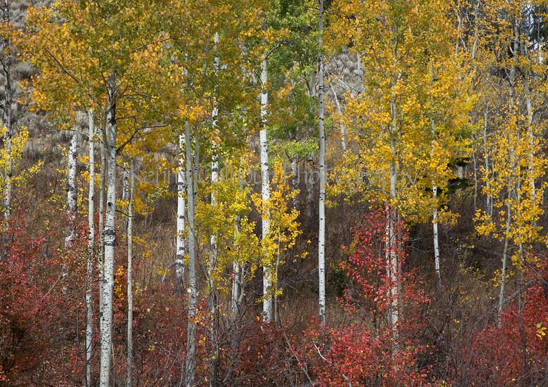 Teton Color-3591