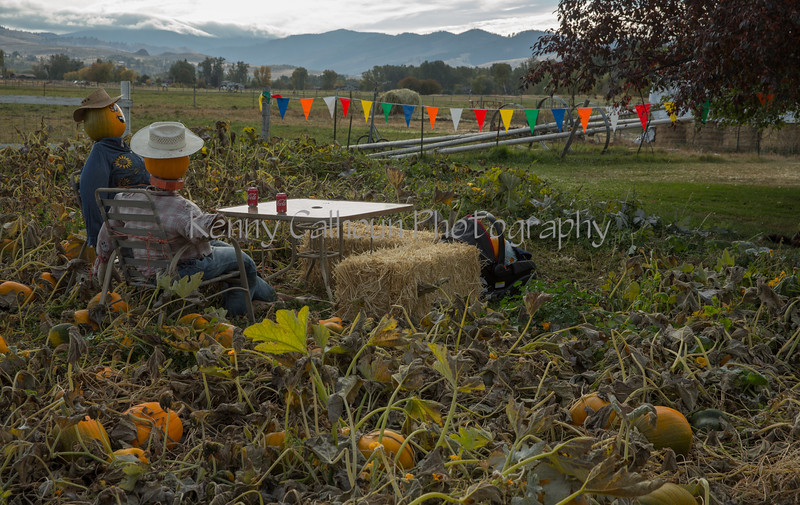 Meadowlark Pumpkin Farm-2196