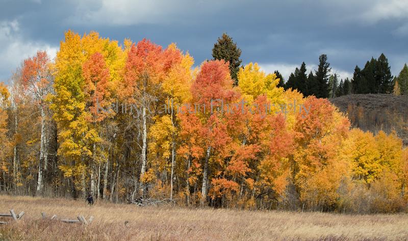 Teton Color-9466