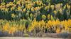 Teton Valley Color-4396