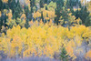 Teton Valley Color-4387