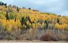Teton Valley Color-4392