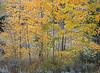 Neighborhood Fall color-1770