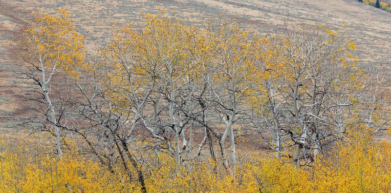 Antelope Flats Fall color-1489