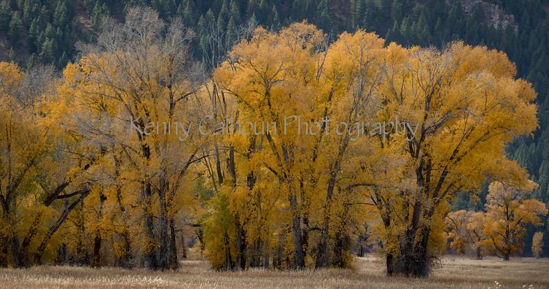 Teton Color-9757
