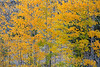 Neighborhood Fall color-1787