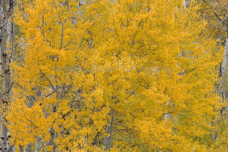 Antelope Flats Fall color-1551