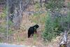Teton Lake Bears-4106