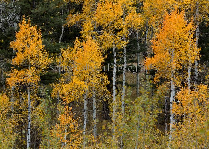 Antelope Flats Fall color-1499
