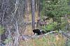 Teton Lake Bears-4164