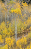 Antelope Flats Fall color-1493