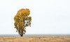 Teton Tree-4049