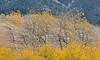 Antelope Flats Fall color-1490