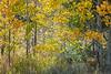 Neighborhood Fall color-1802