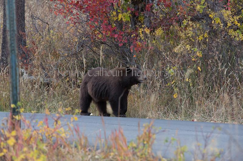Wilson Rd Bears-3813