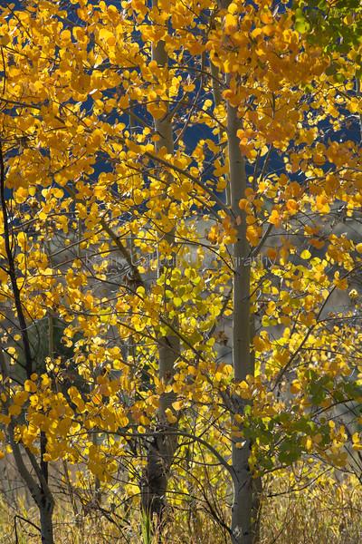 Neighborhood Fall color-1868