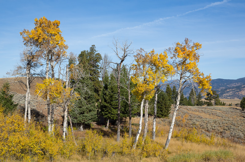 Blacktail Rd Fall Color-2069