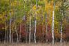 Teton Color--7