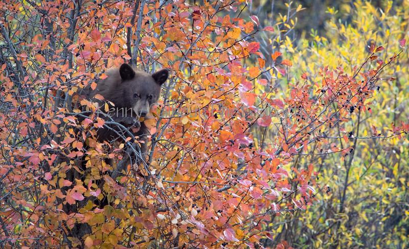Wilson Rd Bears-0313