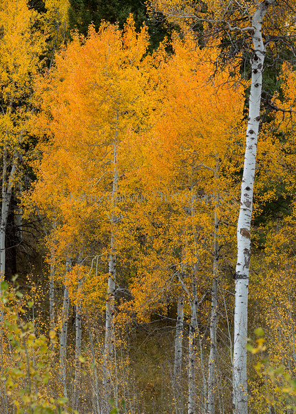 Antelope Flats Fall color-1509