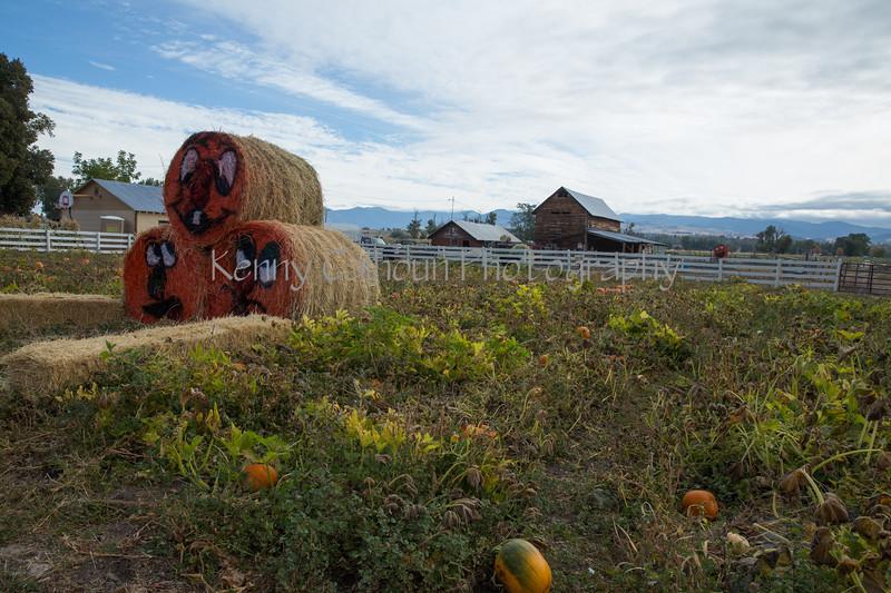 Meadowlark Pumpkin Farm-2258