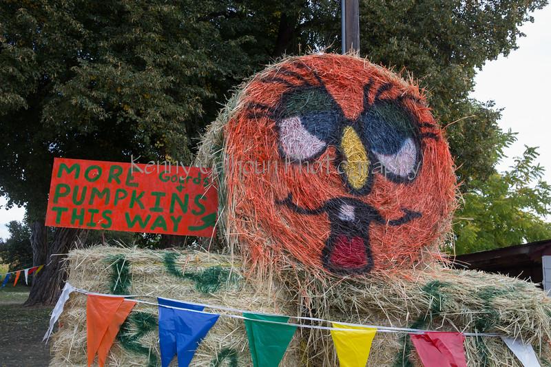 Meadowlark Pumpkin Farm-2204
