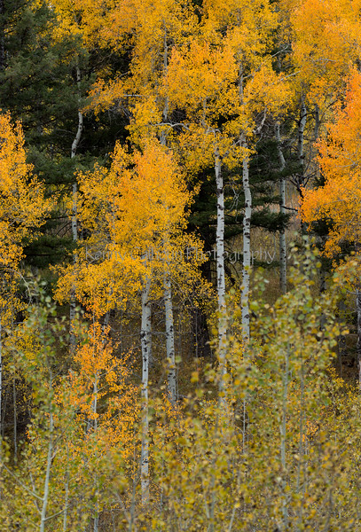 Antelope Flats Fall color-1500